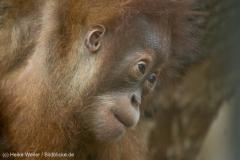 Zoo_Dortmund_100715_IMG_6811