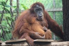 Zoo_Dortmund_100715_IMG_6822
