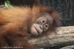 Zoo_Dortmund_100715_IMG_6833