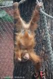 Zoo_Dortmund_100715_IMG_6842