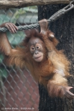 Zoo_Dortmund_100715_IMG_6852