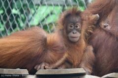 Zoo_Dortmund_100715_IMG_6885