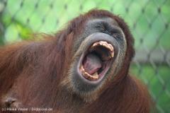 Zoo_Dortmund_100715_IMG_6899