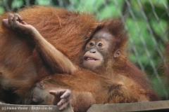 Zoo_Dortmund_100715_IMG_6931