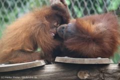 Zoo_Dortmund_100715_IMG_6941