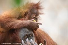 Zoo_Dortmund_100715_IMG_7001