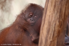 Zoo_Dortmund_100715_IMG_7009