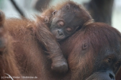 Zoo_Dortmund_100715_IMG_7028