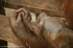 Zoo_Dortmund_100715_IMG_7035