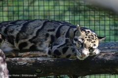 Zoo_Dortmund_100715_IMG_7130