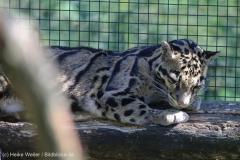 Zoo_Dortmund_100715_IMG_7139