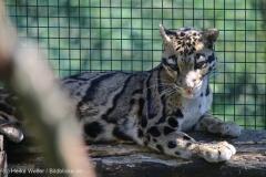 Zoo_Dortmund_100715_IMG_7147