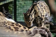 Zoo_Dortmund_100715_IMG_7154