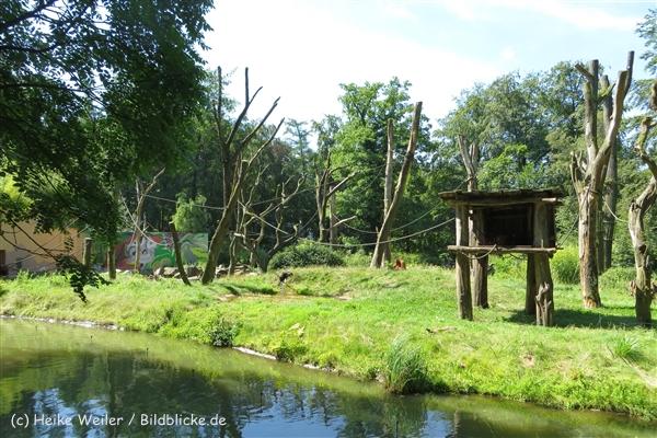 Zoo_Dortmund_190714_copy_Heike_Weiler_IMG_1971_5301