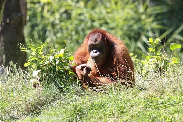 Zoo_Dortmund_190714_copy_Heike_Weiler_IMG_1972