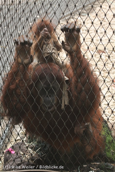 Zoo_Dortmund_190714_copy_Heike_Weiler_IMG_2012