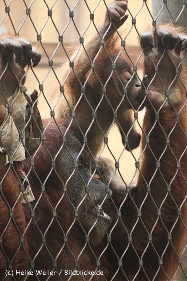 Zoo_Dortmund_190714_copy_Heike_Weiler_IMG_2017