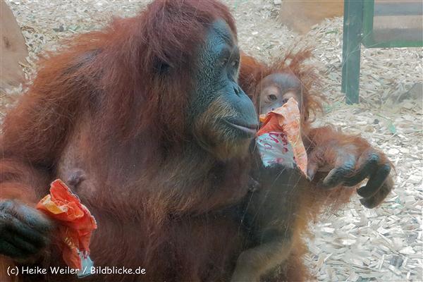 Zoo_Dortmund_190714_copy_Heike_Weiler_IMG_2017_5313