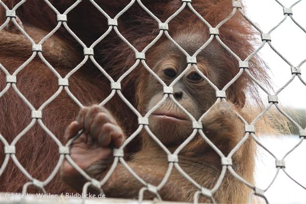 Zoo_Dortmund_190714_copy_Heike_Weiler_IMG_2041