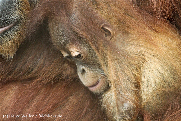 Zoo_Dortmund_190714_copy_Heike_Weiler_IMG_2066