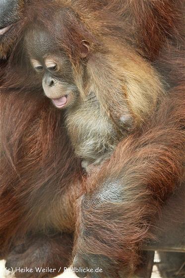 Zoo_Dortmund_190714_copy_Heike_Weiler_IMG_2075