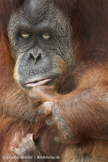 Zoo_Dortmund_190714_copy_Heike_Weiler_IMG_2084