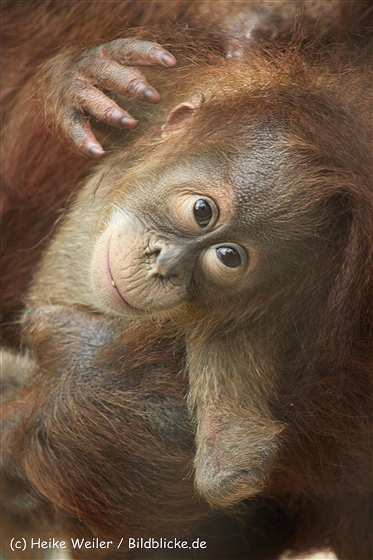 Zoo_Dortmund_190714_copy_Heike_Weiler_IMG_2096