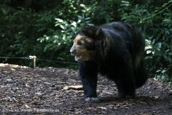 Zoo_Dortmund_190714_copy_Heike_Weiler_IMG_2144