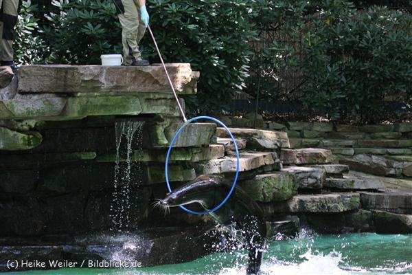 Zoo_Dortmund_190714_copy_Heike_Weiler_IMG_2154