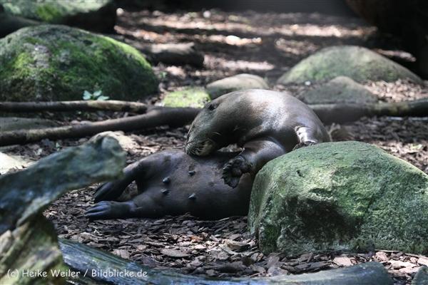 Zoo_Dortmund_190714_copy_Heike_Weiler_IMG_2222