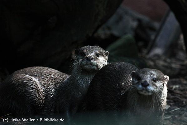 Zoo_Dortmund_190714_copy_Heike_Weiler_IMG_2244