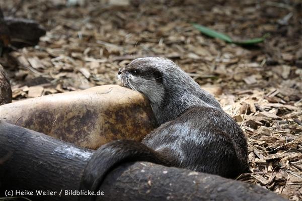 Zoo_Dortmund_190714_copy_Heike_Weiler_IMG_2257