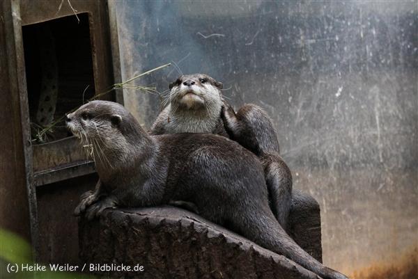 Zoo_Dortmund_190714_copy_Heike_Weiler_IMG_2274