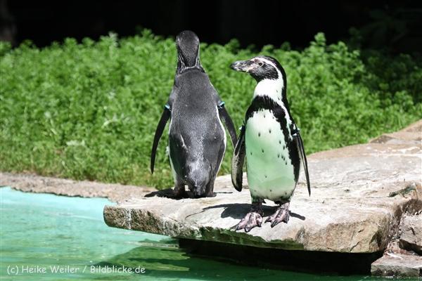 Zoo_Dortmund_190714_copy_Heike_Weiler_IMG_2312