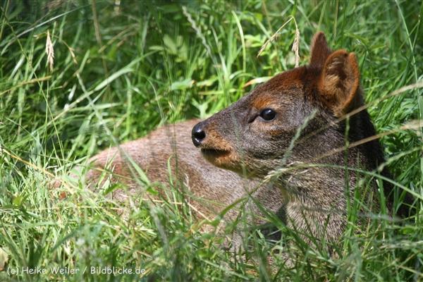 Zoo_Dortmund_190714_copy_Heike_Weiler_IMG_2339