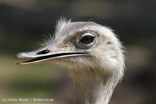 Zoo_Dortmund_190714_copy_Heike_Weiler_IMG_2342