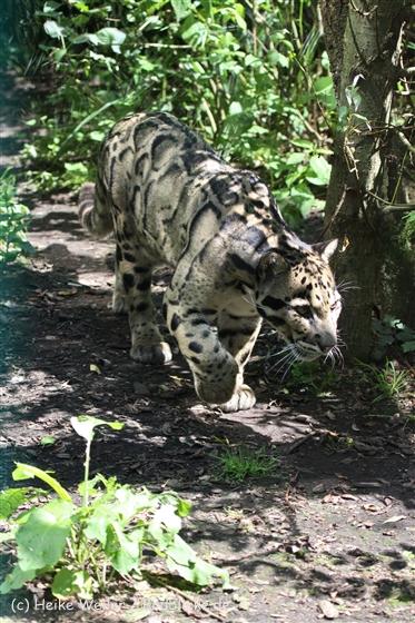 Zoo_Dortmund_190714_copy_Heike_Weiler_IMG_2352