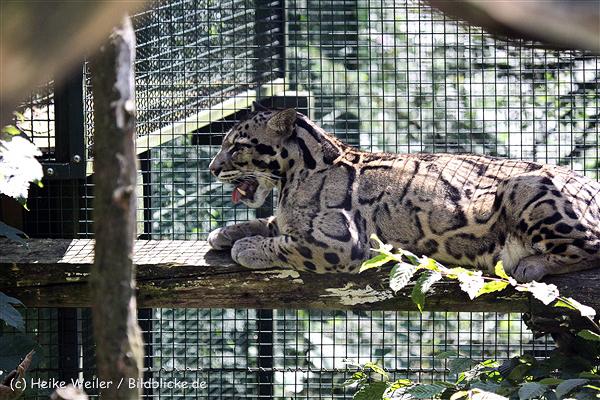 Zoo_Dortmund_190714_copy_Heike_Weiler_IMG_2370