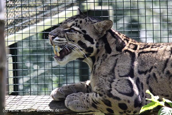 Zoo_Dortmund_190714_copy_Heike_Weiler_IMG_2387