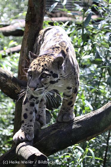 Zoo_Dortmund_190714_copy_Heike_Weiler_IMG_2415