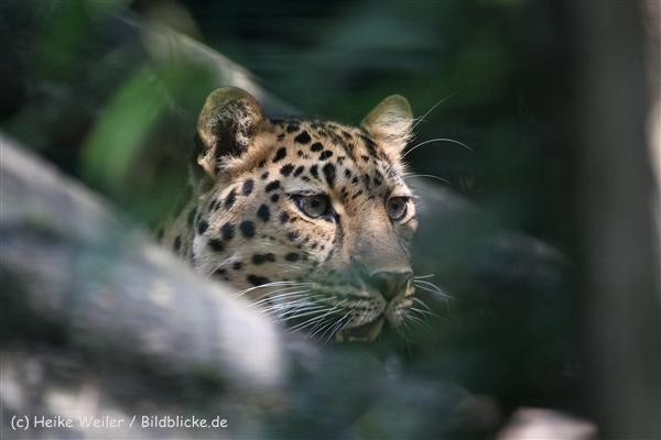 Zoo_Dortmund_190714_copy_Heike_Weiler_IMG_2440