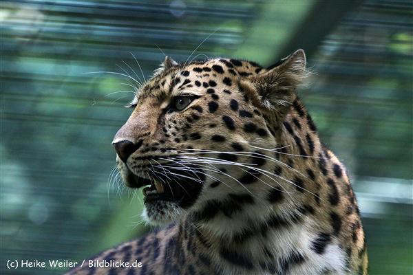 Zoo_Dortmund_190714_copy_Heike_Weiler_IMG_2474
