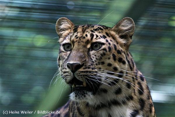 Zoo_Dortmund_190714_copy_Heike_Weiler_IMG_2486