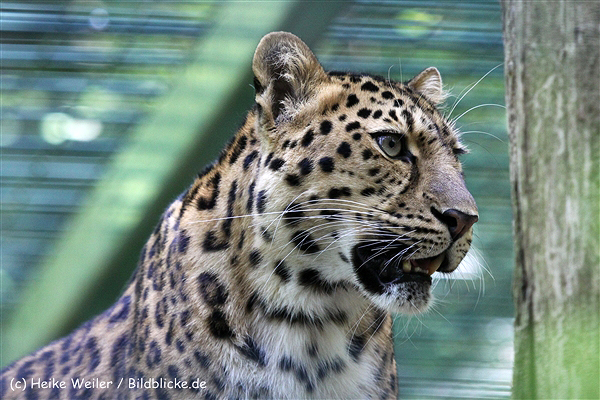 Zoo_Dortmund_190714_copy_Heike_Weiler_IMG_2493