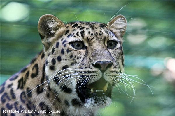 Zoo_Dortmund_190714_copy_Heike_Weiler_IMG_2519