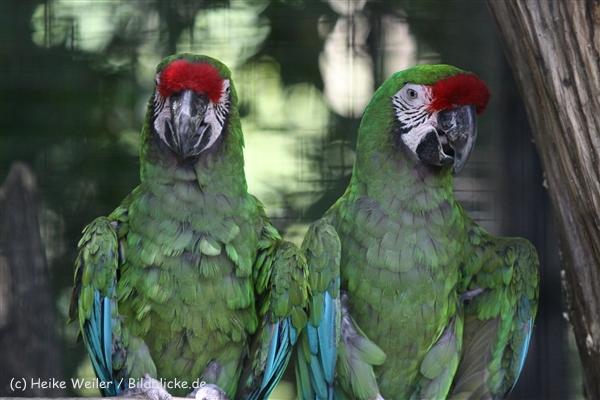 Zoo_Dortmund_190714_copy_Heike_Weiler_IMG_2535