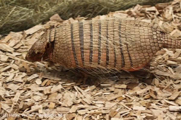 Zoo_Dortmund_190714_copy_Heike_Weiler_IMG_2549