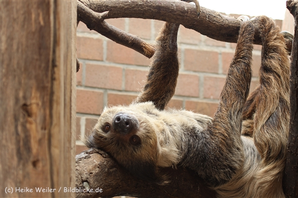 Zoo_Dortmund_190714_copy_Heike_Weiler_IMG_2568