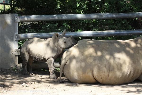 Zoo_Dortmund_190714_copy_Heike_Weiler_IMG_2582