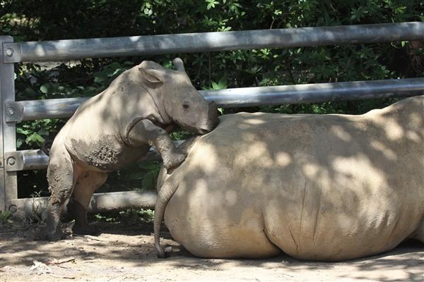 Zoo_Dortmund_190714_copy_Heike_Weiler_IMG_2587